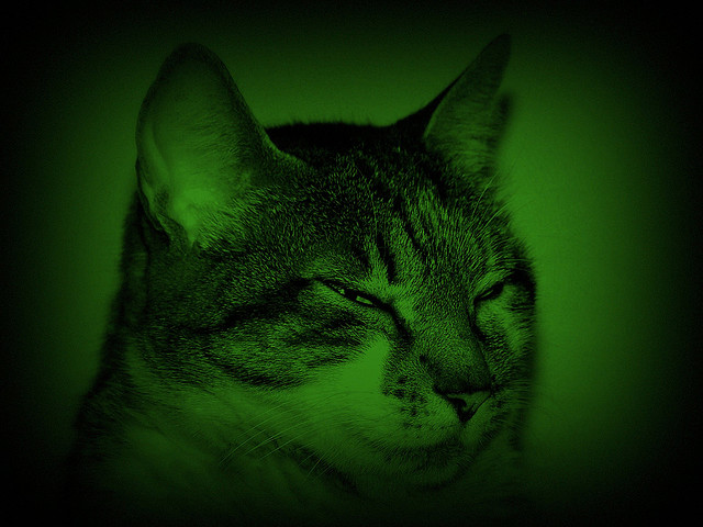 Night Vision Cat. Photo: Lorchaos