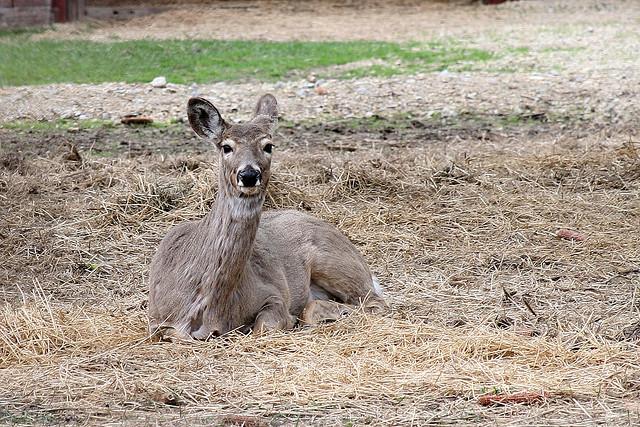 California Deer Drawing This Year The California Deer