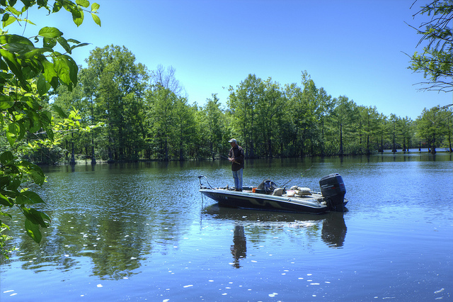 Out fishing. Photo: finchlake2000