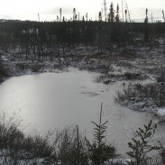 Wintry swamp. Photo: Peupleloup