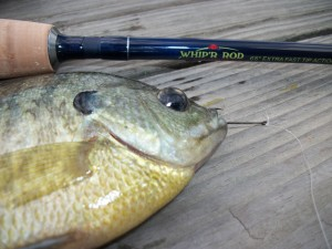 Whip'R Panfish Rod