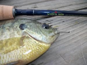 Whip r panfish rod outdoorhub for Good fishing pole brands