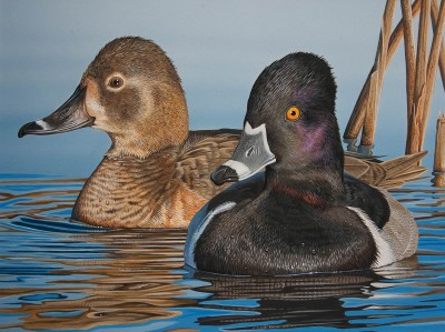 A pair of ringed-neck ducks painted by Jim Denney of Alexander City, Ala., was the winner of the 2011 Alabama Waterfowl Stamp Art Contest. The artwork adorns the 2012-2013 Alabama Waterfowl Stamp.