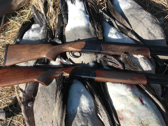 Webley and Scott shotguns with a limit of waterfowl