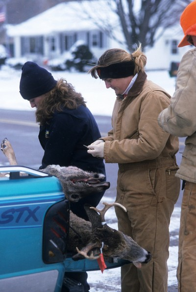 Wildlife disease specialists remove tissue sample from harvested deer to test for chronic wasting disease.
