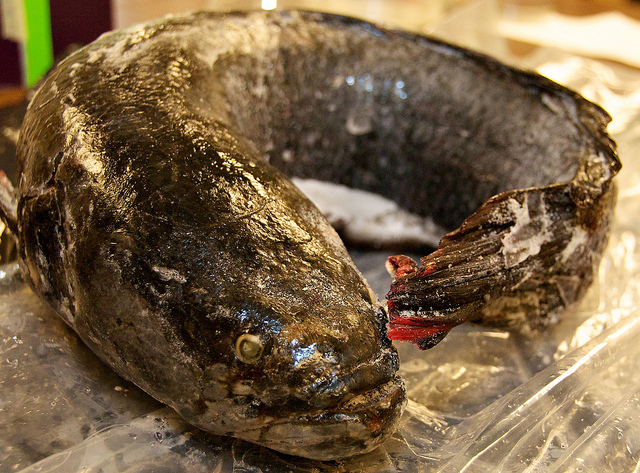 how to cook snakehead fish