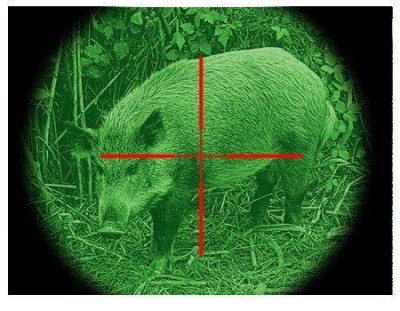 Hog in crosshairs