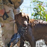 HRC offers hunt tests for any level of retriever.