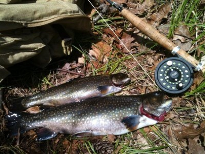These brook trout were caught by fly-fishing a remote New Hampshire pond. (Steve Hickoff photo)