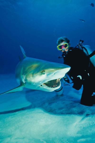 BAH.Shark.2