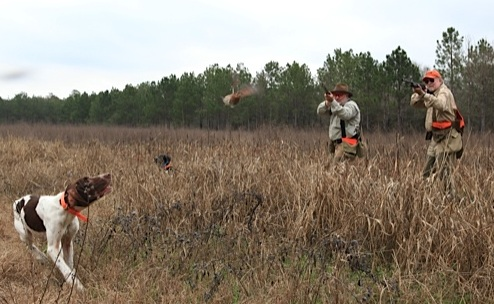 to hunt quail over  Quail Hunting Background