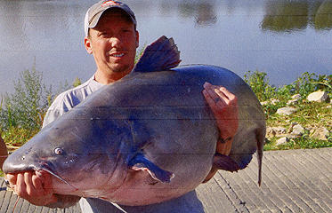 Monster blue catfish certified as kansas record outdoorhub for Kansas fish records