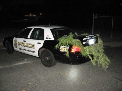 Mendota Heights police confiscate numerous marijuana plants from Valley View park. Photo courtesy of Mendota Heights Police Department.