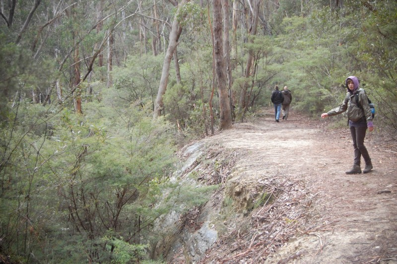 bushwalking destinations in new south wales
