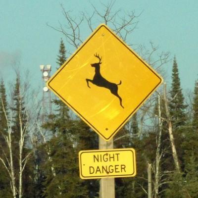 Deer danger