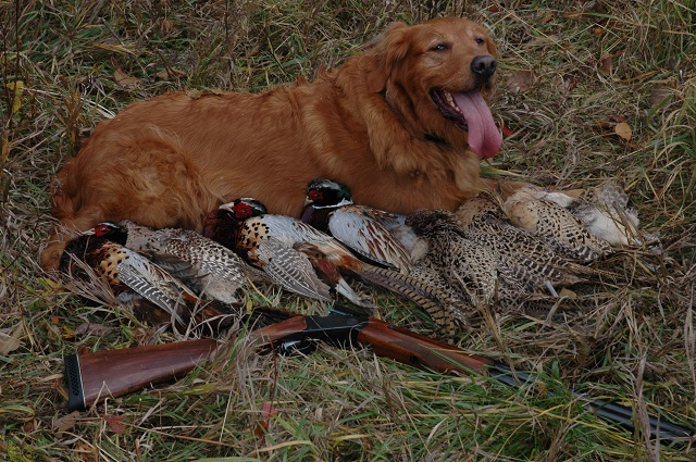 Clare with the results of a Pheasant Fest. Photo by Dave Mull