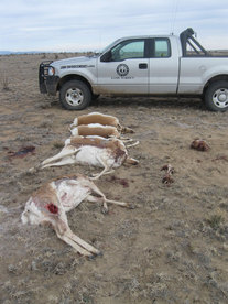 New mexico game and fish arrests suspected poacher who for Nm department of game and fish