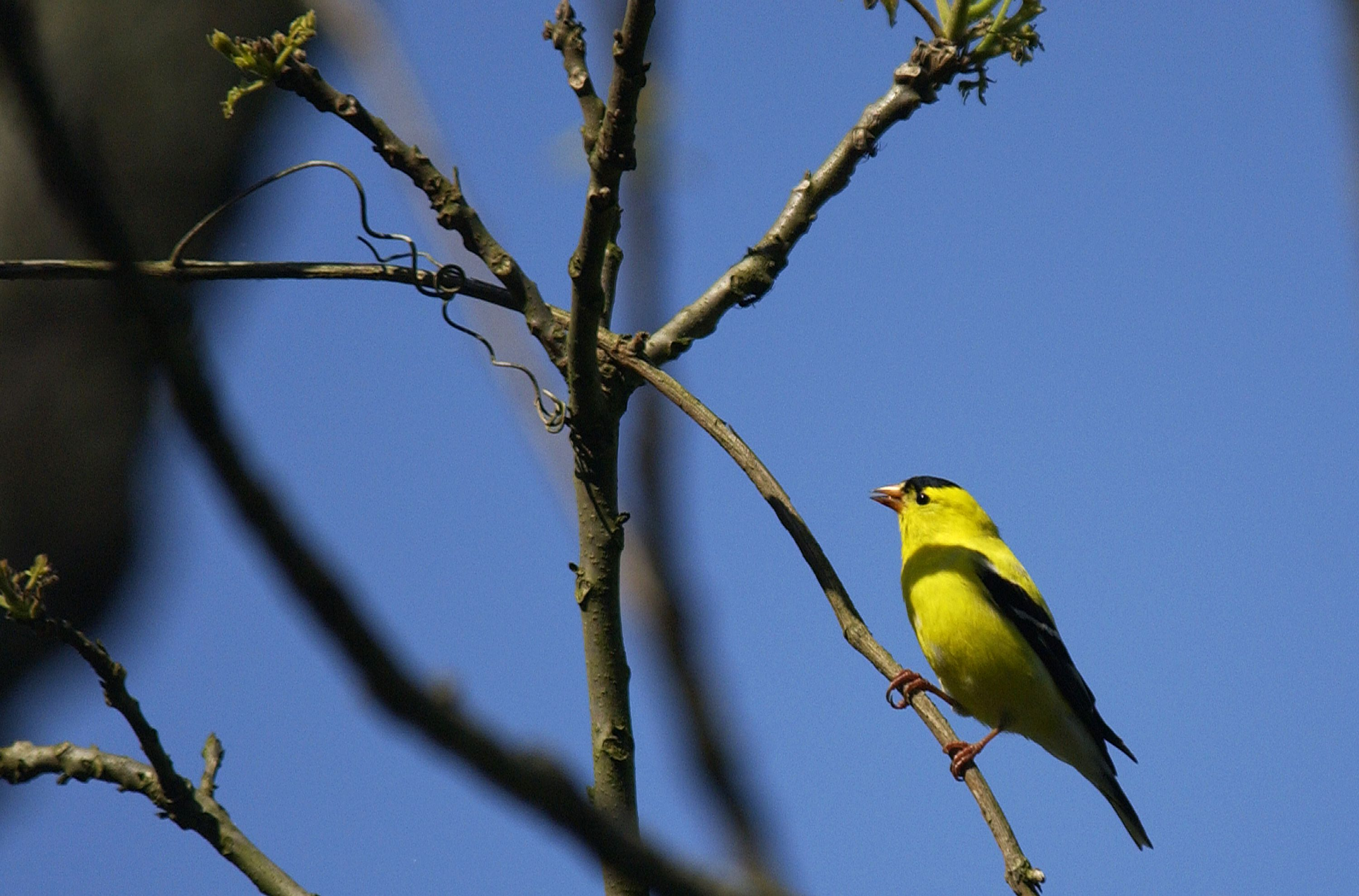 west virginia great backyard bird count at state parks part of