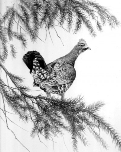 Though my first true hunt concluded without a harvest of the targeted animal, I was able to take a Blue Grouse and enjoy all Grandmother King's cooking had to offer. Illustration by Dallen Lambson.