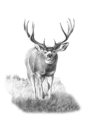 My introduction to deer hunting was spurred by our cabin's next-door neighbor, who spoke of the many deer he had seen on one of his backwoods trips.