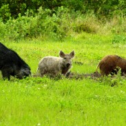 Feral hogs are leaving a path of destruction across Texas, one meal at a time.