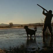 Every hunter should continue training their dog through the off-season to keep him or her sharp.