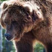 One hunter managed to survive both a violent bear encounter and 36 hours in the Alaskan wilderness.