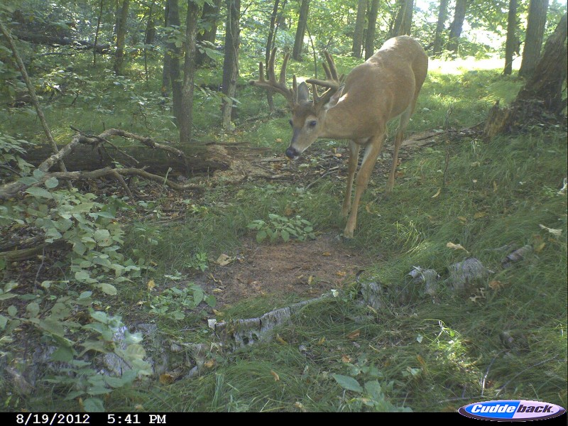 It's hard to beat using a good mineral and a trail camera for getting a good look at the potential bucks on a piece of property, no matter how small it is.