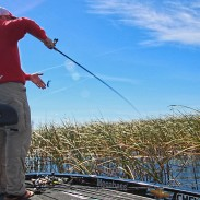 In the late summer, bass will begin to take cover in areas of thick vegetation in search of cooler temperatures and more oxygen.