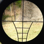 A biparisan bill has passed the Wisconsin State Senate that would open a crossbow hunting season alongside bow season.