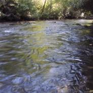 The Davidson River in western North Carolina.