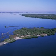 There are 561 national wildlife refuges across the United States, 329 of which are open for hunting and 271 for fishing. Pictured is Pelican Island, which became the first national refuge when it was established in 1903.