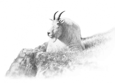 Dunn had managed to outsmart the wily goat, and was well on his way to ledge above the animal.