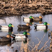 Where you set up your waterfowl decoys depends on the wind. If the wind shifts, you need to be able to change things in a hurry to be successful.