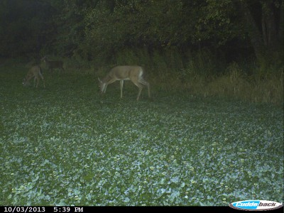 During the last couple hours of daylight in the evening, deer often move towards the fields where they feed. It's the most predictable time of the day to see deer.