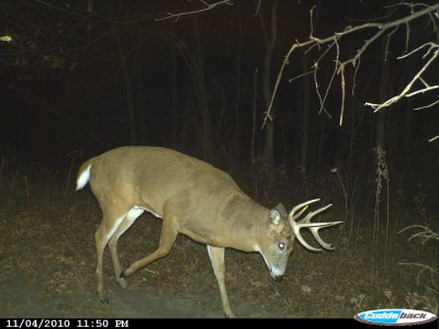 Bucks tend to visit scrapes in the night, especially during October and early November. Using these tactics to enhance scrapes will increase the odds bucks will visit during legal shooting hours.