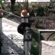bear escape