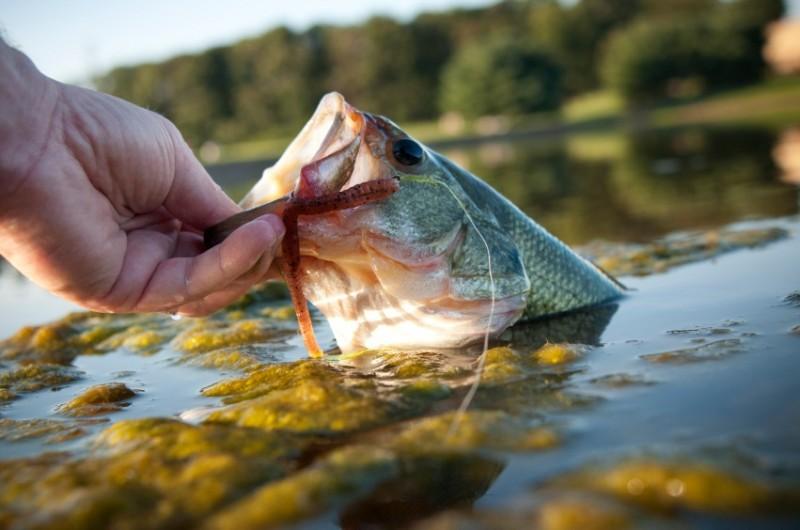 Smarter than a sixth grader seeking fishing regulation for Idaho fish and game regulations