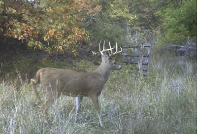Bucks really put on the miles when the rut is winding down in late November. Put yourself in a position to take advantage of it.