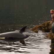On of the fishermen approach the stranded orca in Klakas Inlet.