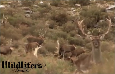 Dan Braman & Jimmy Brown continue their hunt in Argentina.