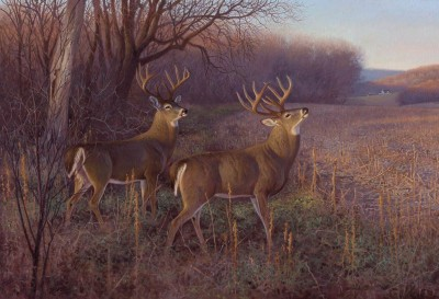 In pursuit of a trophy whitetail buck, Dennis Dunn headed to King Ranch in southeast Texas. Illustration by Hayden Lambson.