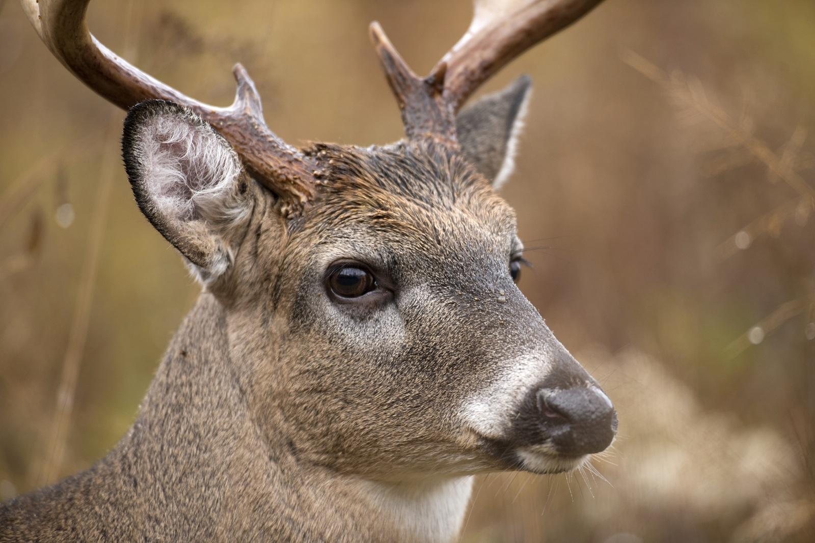 whitetail vision shedding light on deer eyesight outdoorhub