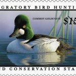 The price of the federal duck stamp has been raised only seven times in the program's history, with the last increase bringing the price to $15 in 1991. Yet the value of the duck stamp has decreased by 40 percent as the price of land has tripled.