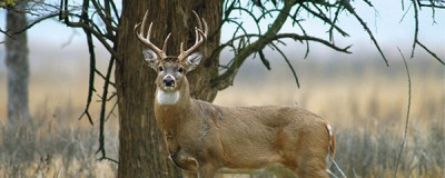 Hunters can register deer online at ksoutdoors.com.