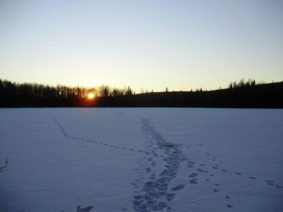 Coyotes love to travel the edges of lakes and rivers downwind of deer bedding areas in the winter.