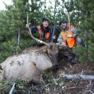 montana elk, bull elk