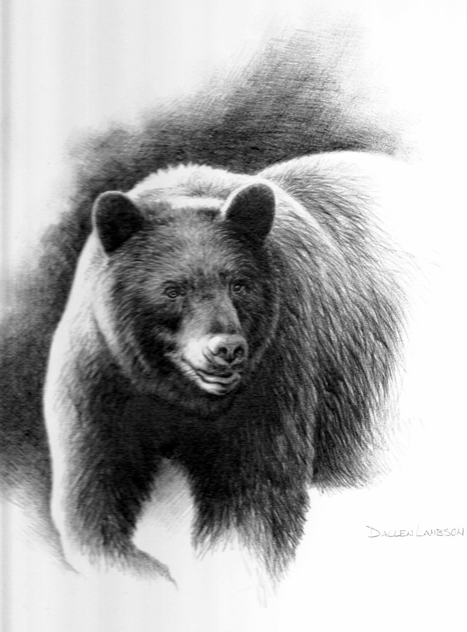 Black bear sketches - photo#16