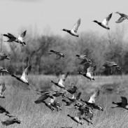 ducksriver