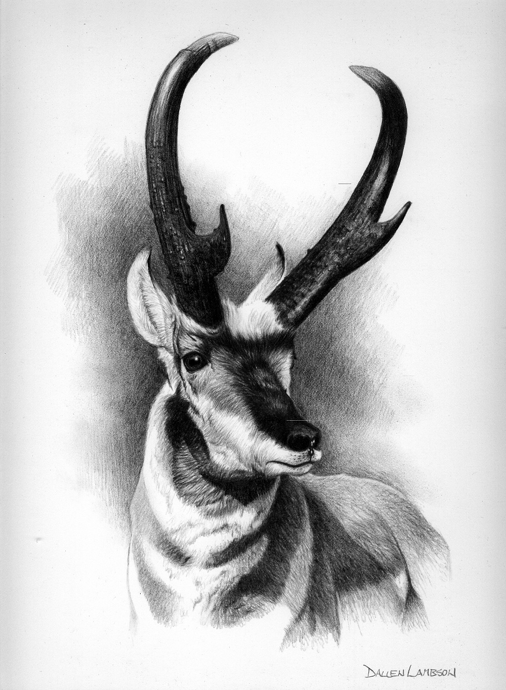 Antelope Face Drawing Drawn Here is The Current